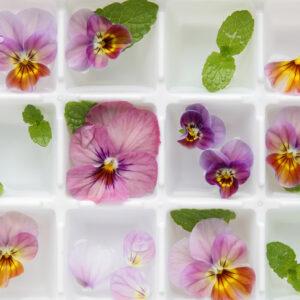 edible-flower-ice-cubes