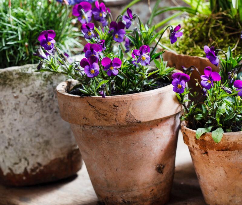 Plant a Kitchen Garden